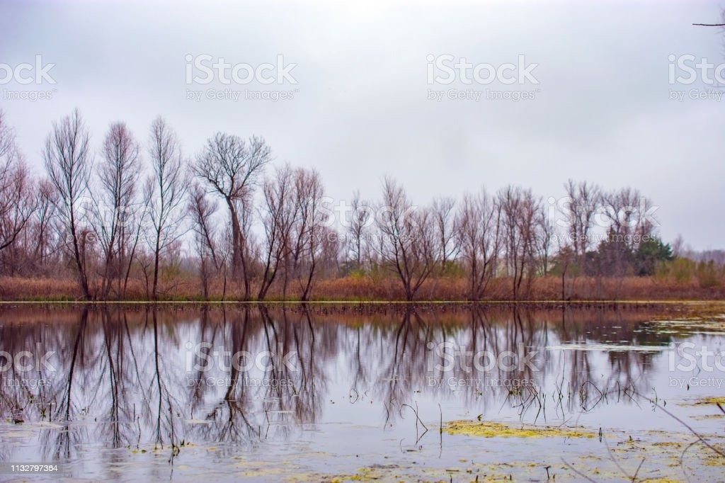 trees and water landscape with reflection in Texas stock photo