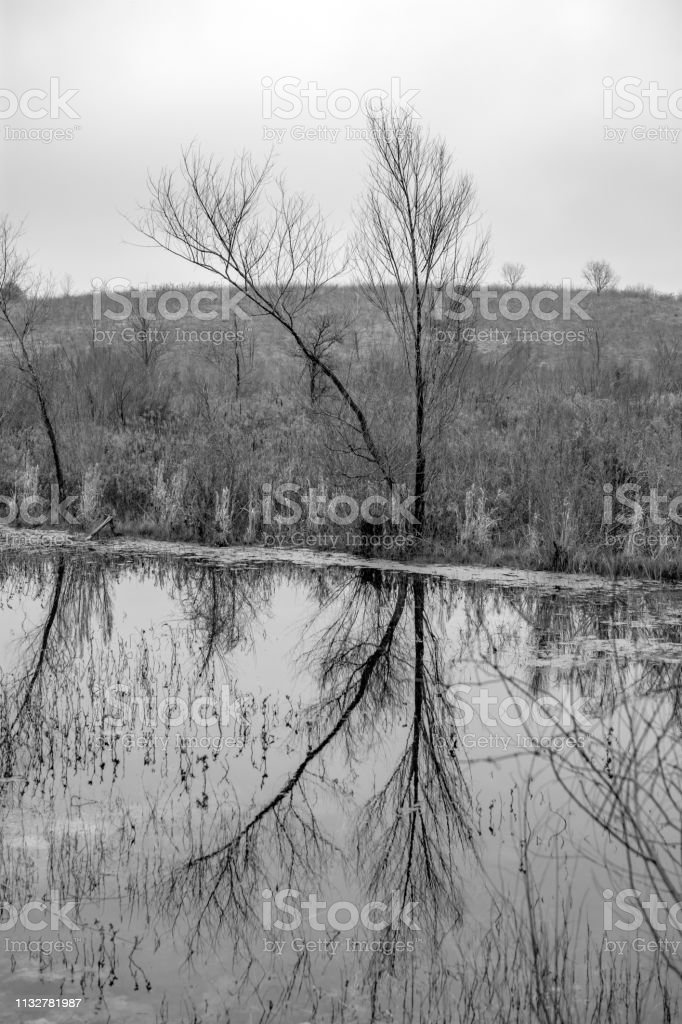 trees and water reflections monochrome Texas stock photo