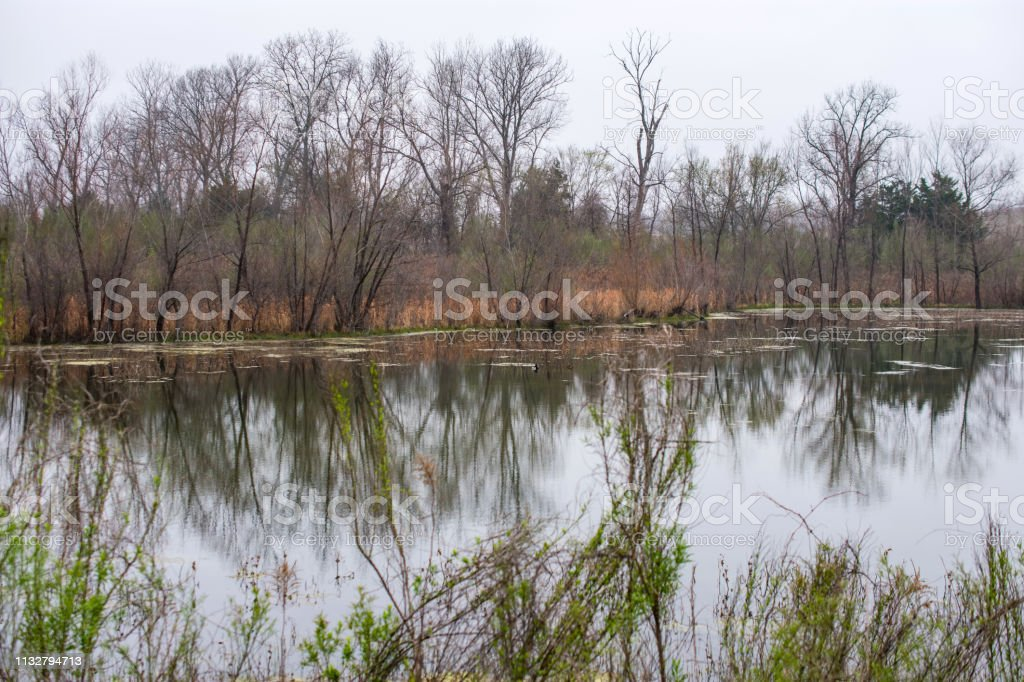 trees and water with reflection stock photo