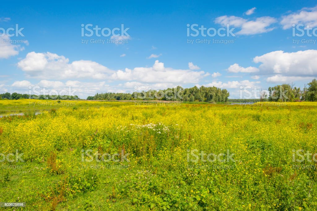 Trees and wild flowers in sunlight in summer stock photo
