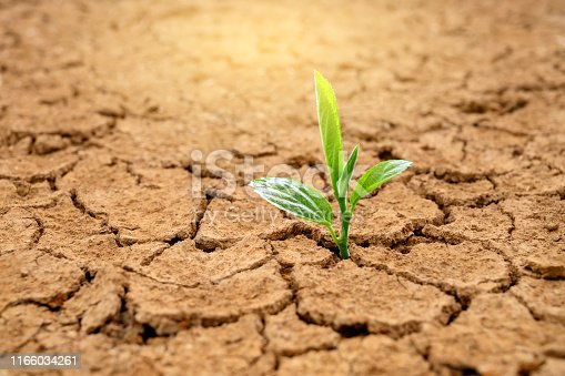Trees are growing in dry ground Concept Forest and nature conservation