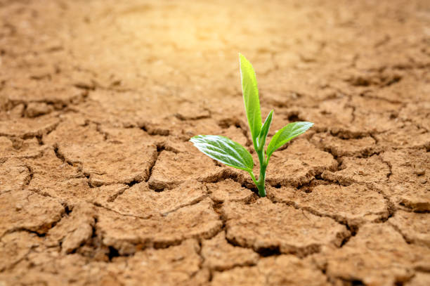 Trees are growing in dry ground Concept Forest and nature conservation Trees are growing in dry ground Concept Forest and nature conservation arid stock pictures, royalty-free photos & images