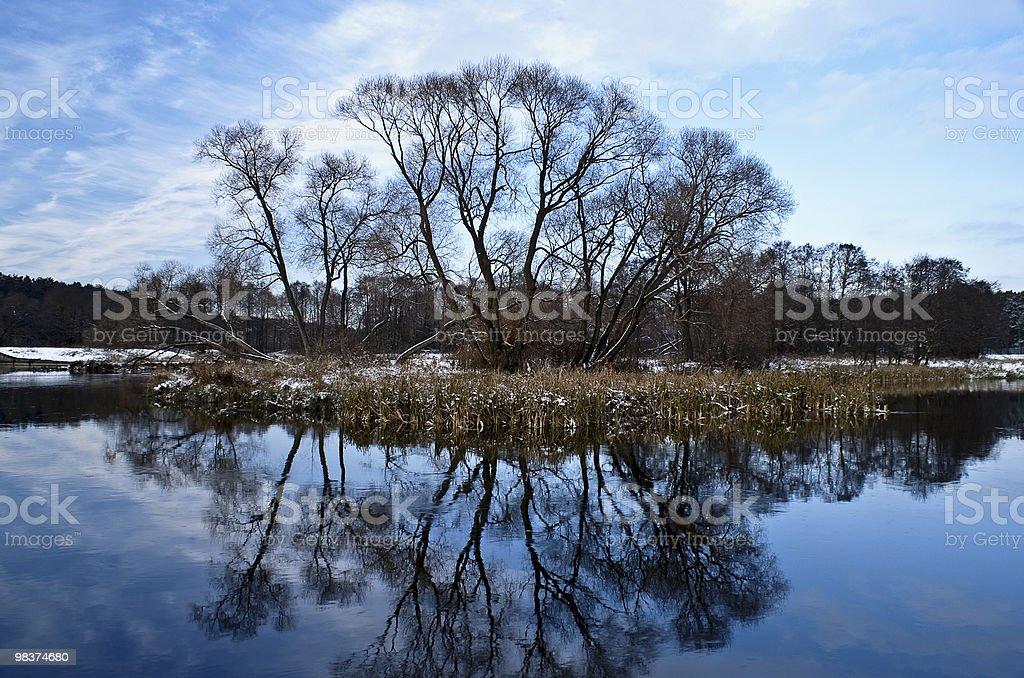 Alberi si riflettono nel lago foto stock royalty-free