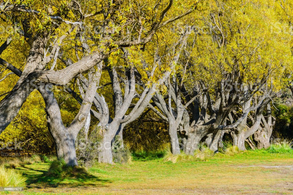 Trees around Lake Pearson in Autumn , South Island of New Zealand royalty-free stock photo