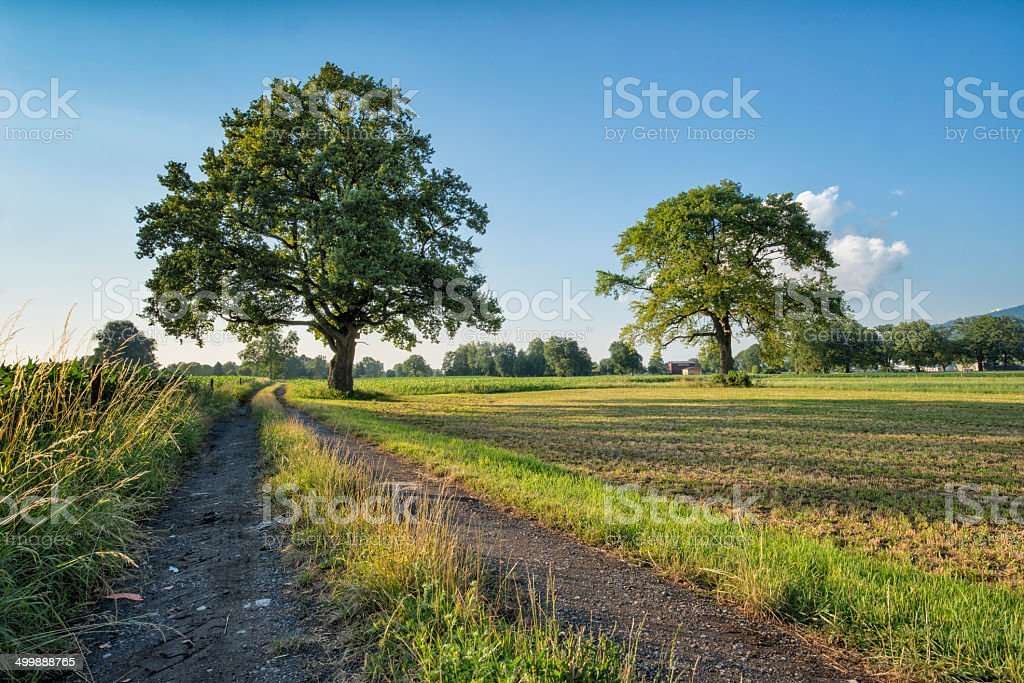 trees at evening royalty-free stock photo