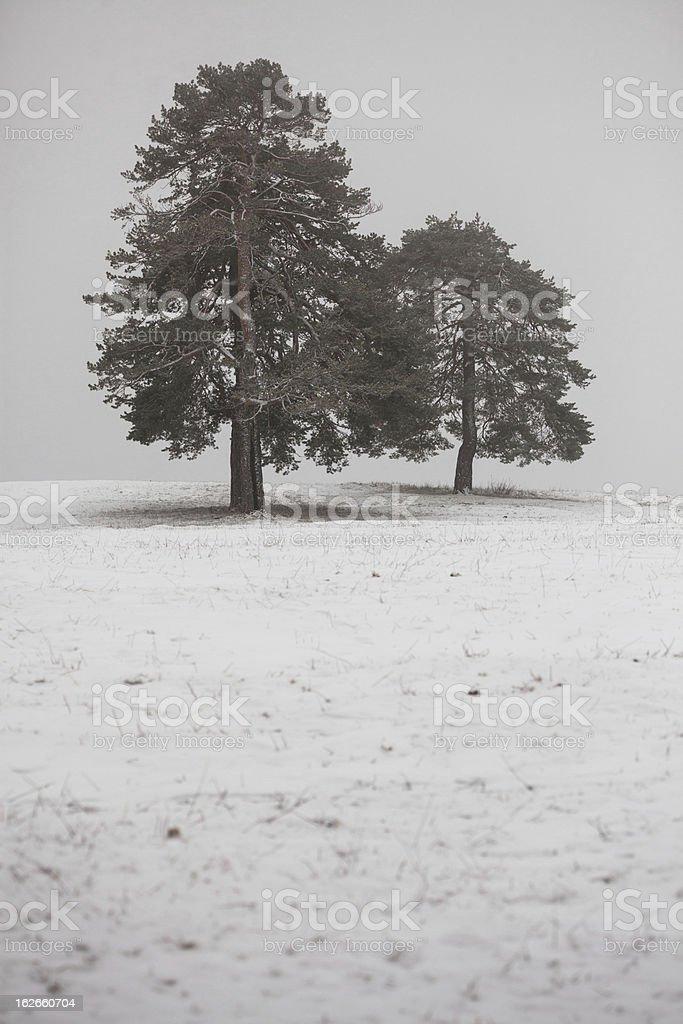 Trees at Mountain Fog royalty-free stock photo