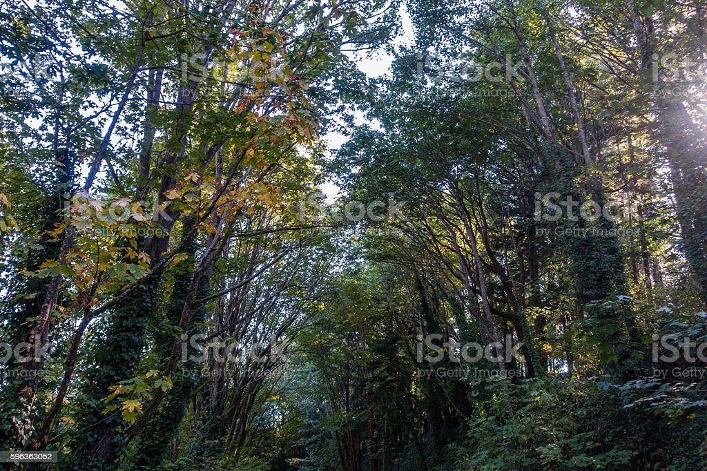 Trees At Saltwater royalty-free stock photo