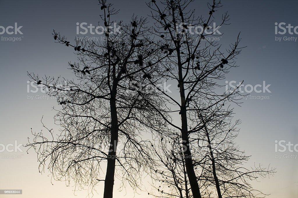 Trees at Sunset in Fall Season royalty-free stock photo