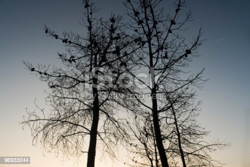 Trees At Sunset In Fall Season Stock Photo & More Pictures of Autumn