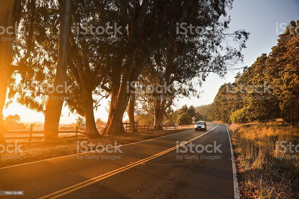 Trees at sunset over a country road stock photo