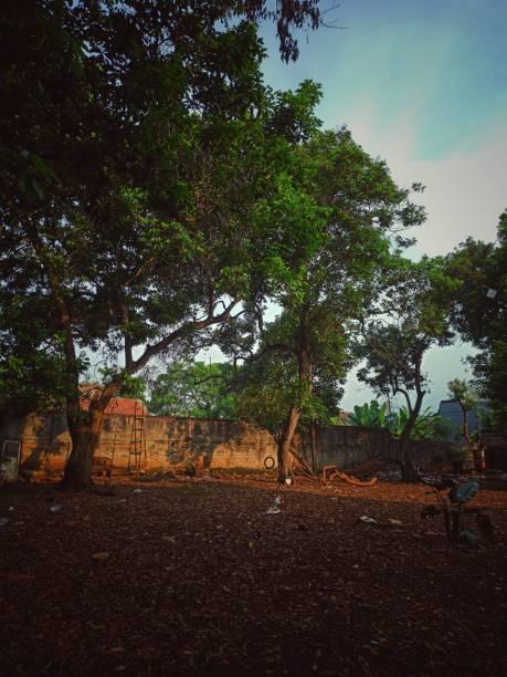Árvores nos Fundos da Casa - foto de acervo