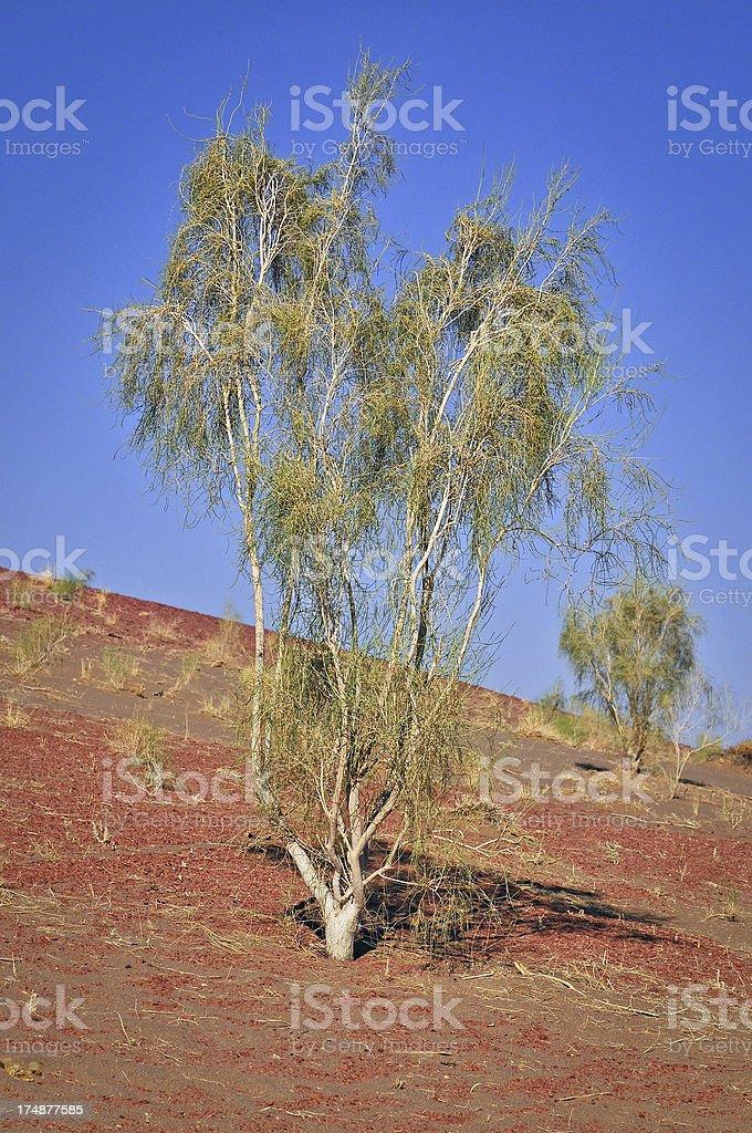Trees at the Edge of Desert Iran Asia royalty-free stock photo