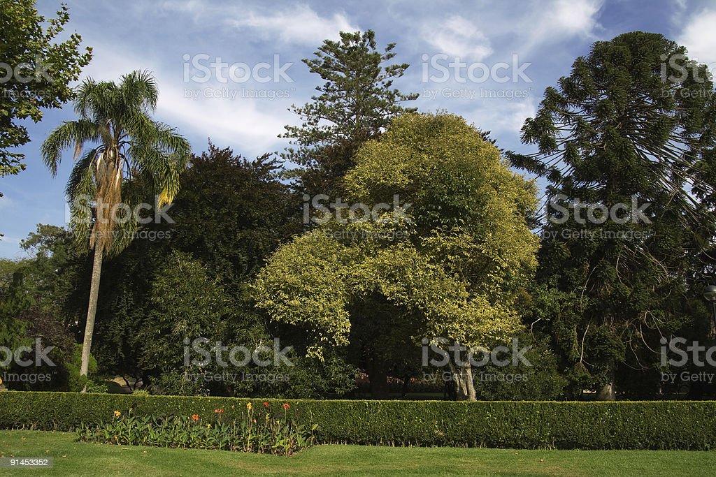Árvores no parque - fotografia de stock