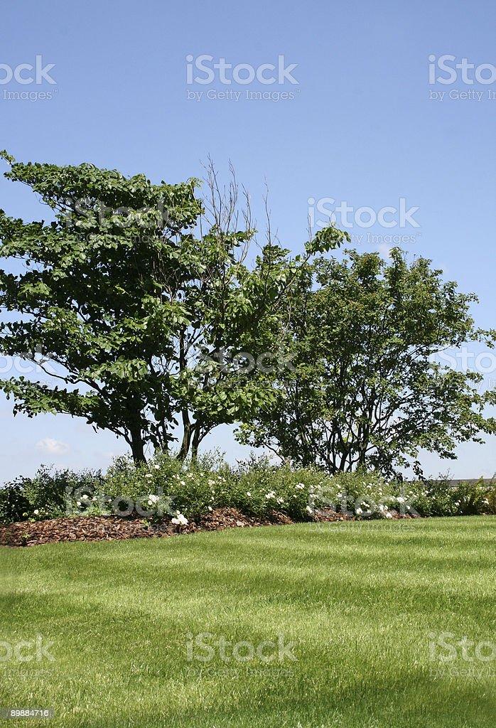 Bäume auf dem Hügel Lizenzfreies stock-foto