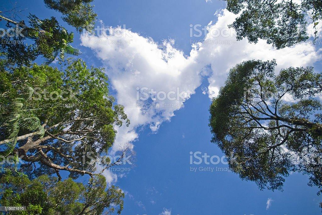 Trees background royalty-free stock photo