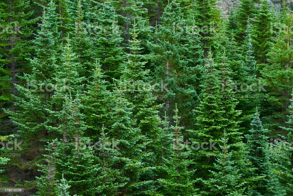 trees background stock photo