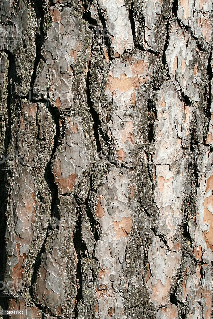 Trees bark - vertical royalty-free stock photo