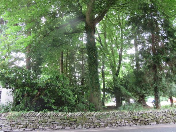 Trees bordered by low stone wall. stock photo