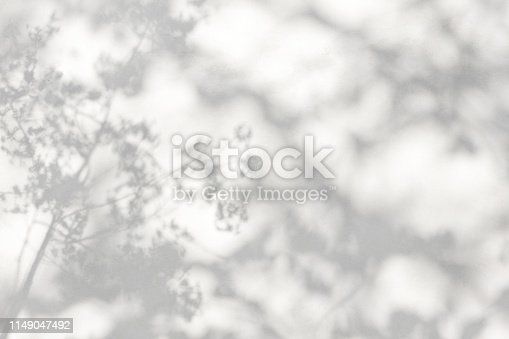 istock trees branch and leaf with shadow on a white concrete wall. Leaf pattern. Blurred background. 1149047492