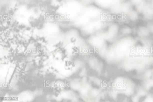 Photo of trees branch and leaf with shadow on a white concrete wall. Leaf pattern. Blurred background.