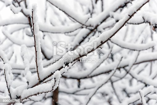 614958148 istock photo Trees branches full of snow in the winter 896040786