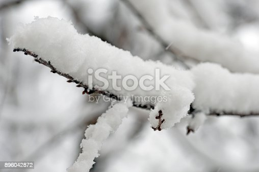 614958148 istock photo Trees branches full of snow in the winter 896042872