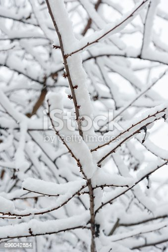 614958148 istock photo Trees branches full of snow in the winter 896042884
