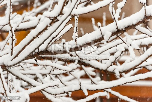 614958148 istock photo Trees branches full of snow in the winter 896042916