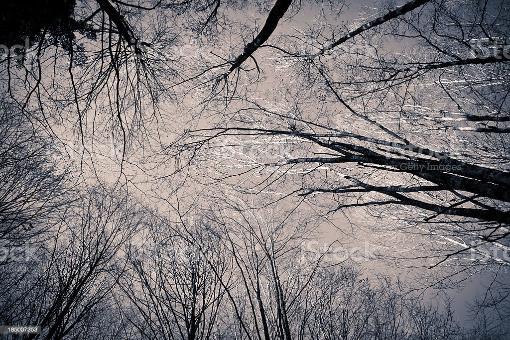 Trees branches royalty-free stock photo