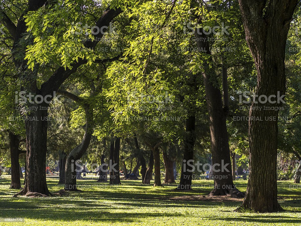 Trees, Buenos Aires royalty-free stock photo