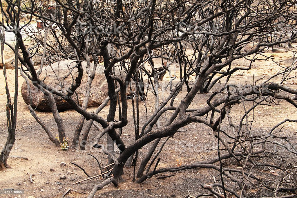 Trees Burnt Fire royalty-free stock photo