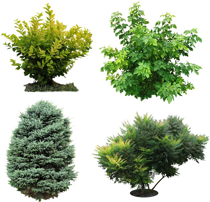 Isolated trees and shrubs.
