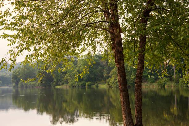 Trees by Green Lane Lake