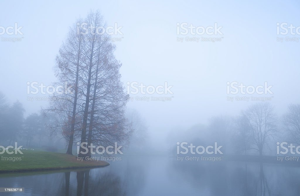 trees by lake in fog during autumn stock photo