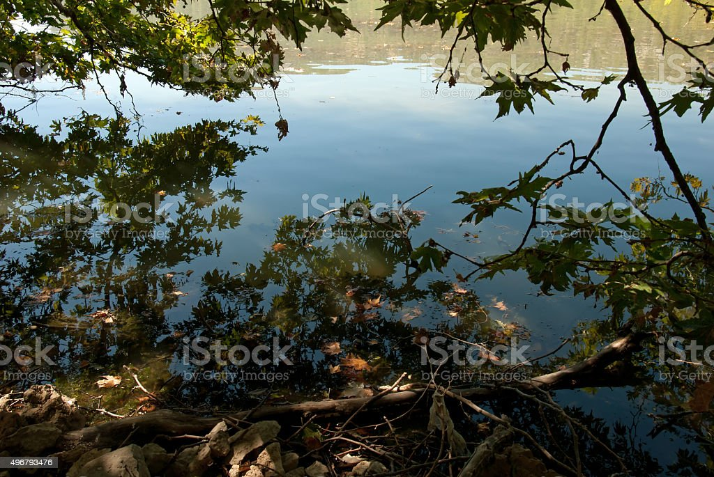 trees by the lake stock photo