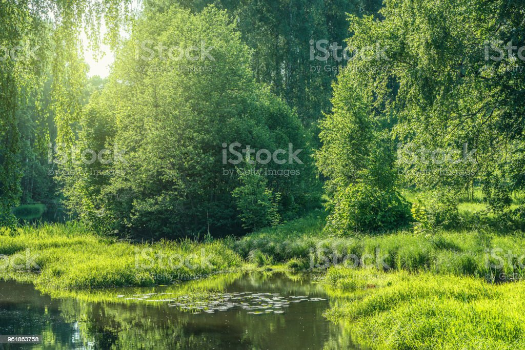Trees by the river. royalty-free stock photo