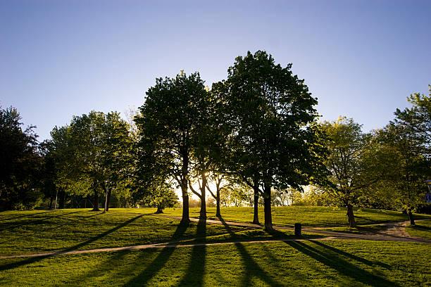 casting ombre des arbres - Photo