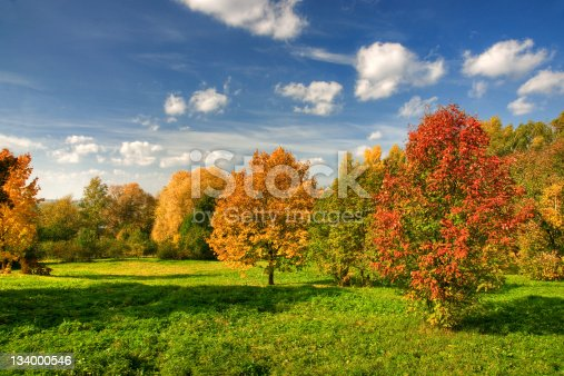 Deciduous trees in multi-colored park during autumn.