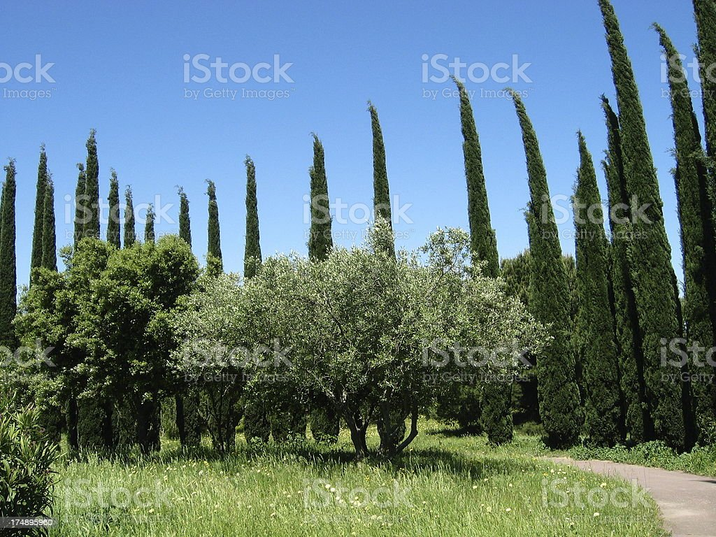 Trees contrast royalty-free stock photo