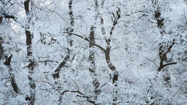 Bäume mit Randfrost bedeckt – Foto