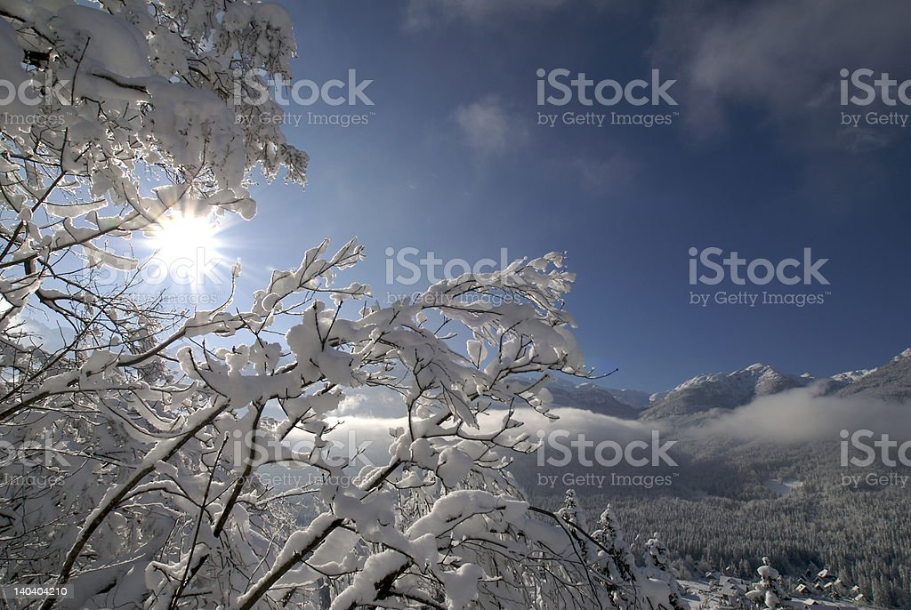 Trees covered in snow royalty-free stock photo