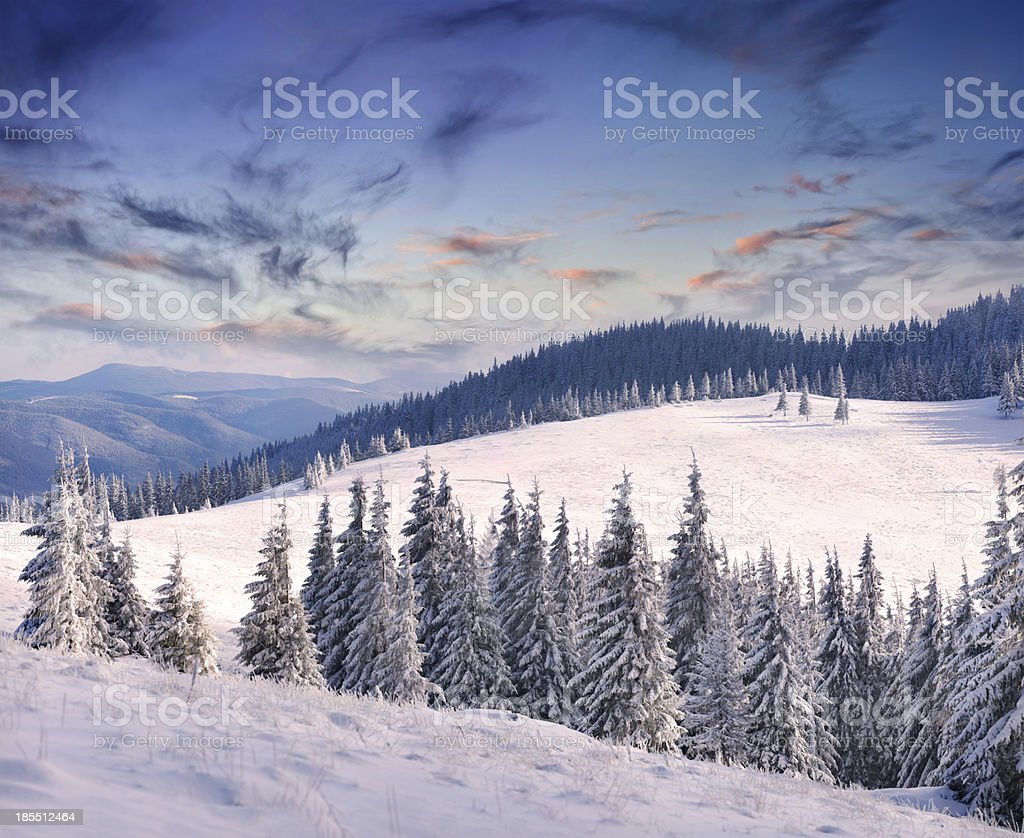 Trees covered with hoarfrost and snow in mountains. royalty-free stock photo