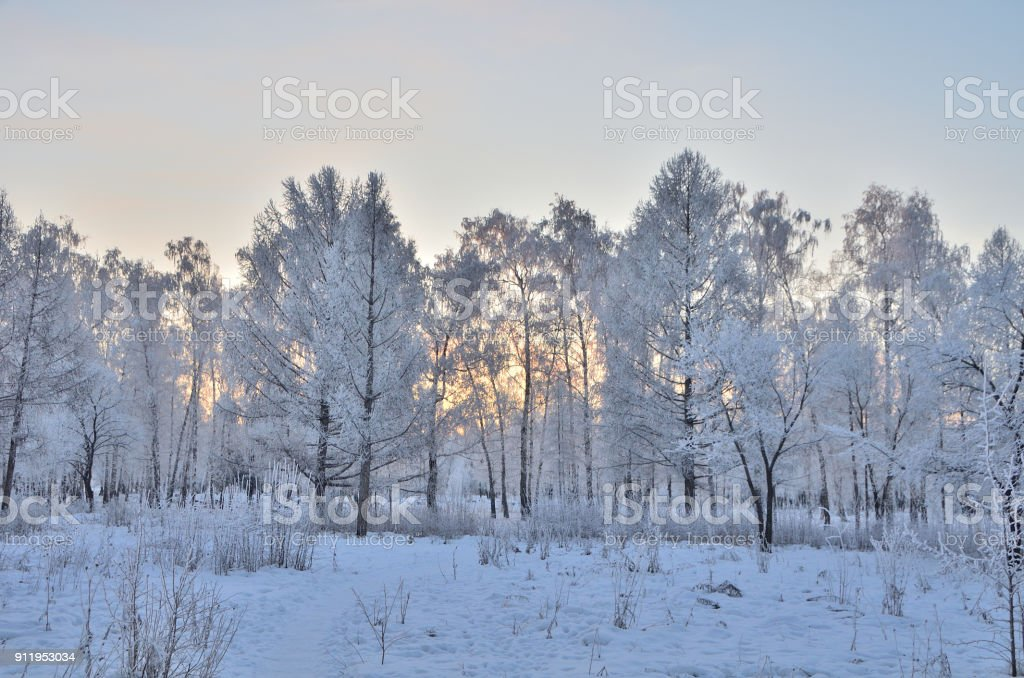 Trees covered with hoarfrost in the first rays of the sun, Omsk region, Russia стоковое фото
