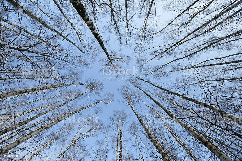 trees crown royalty-free stock photo