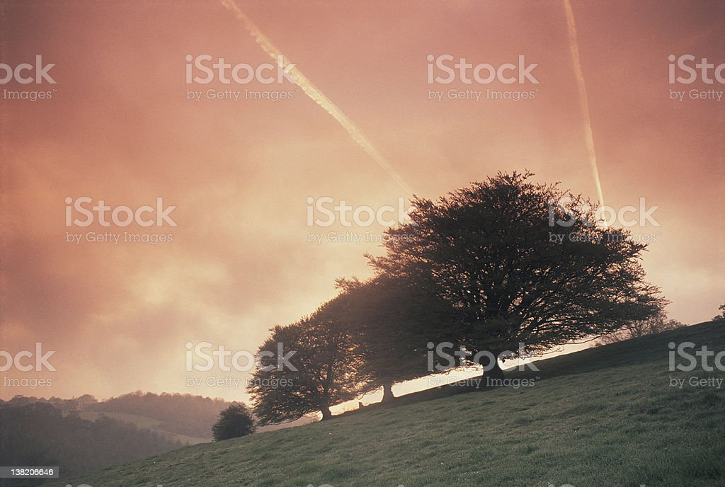 Trees dawn Wales stock photo