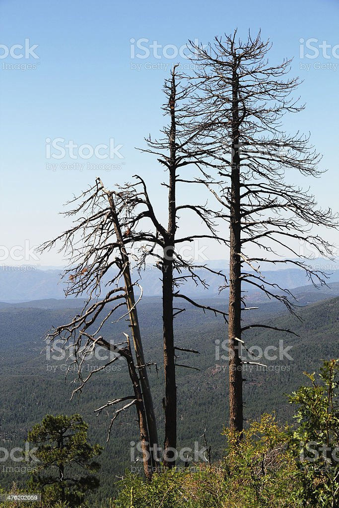 Trees Dead Fire Forest royalty-free stock photo