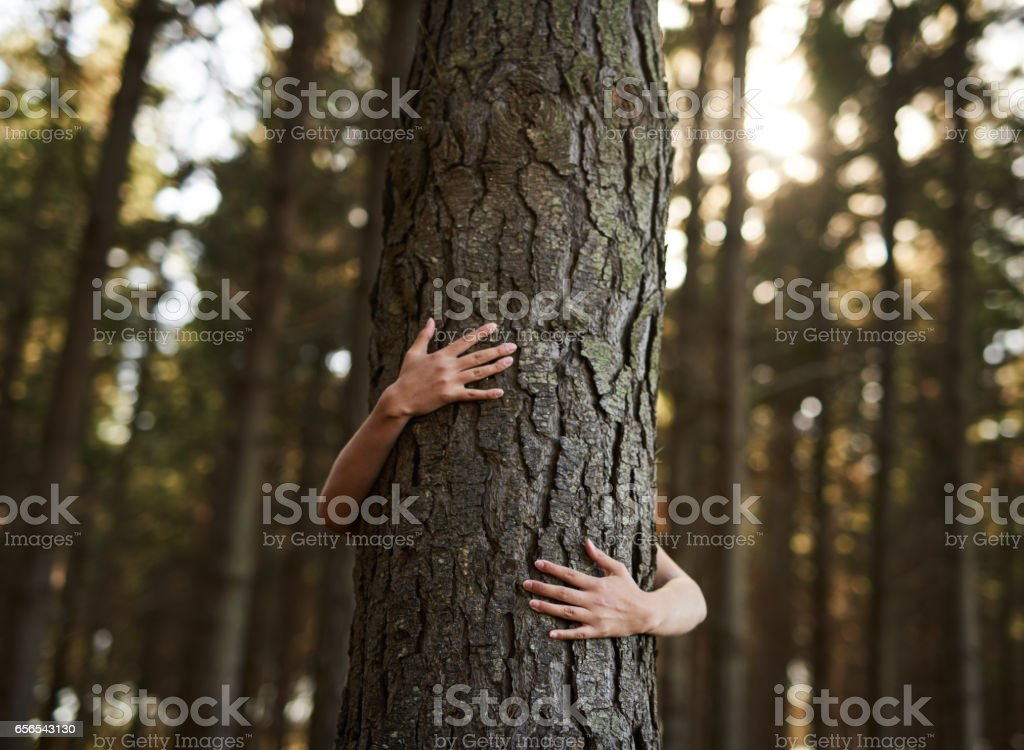Trees deserve love too stock photo