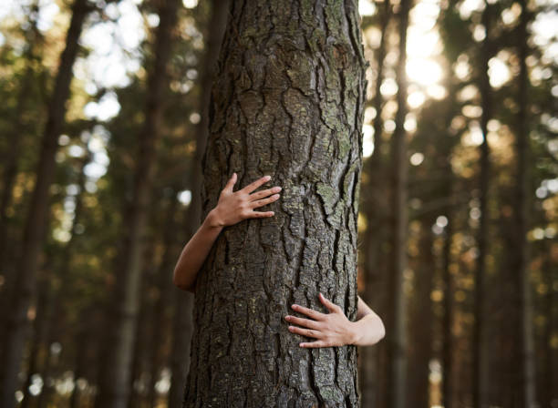 Trees deserve love too Shot of an unidentifiable young woman hugging a tree in the forest tree hugging stock pictures, royalty-free photos & images