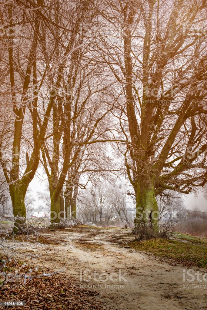 trees dropped leaves frozen stock photo
