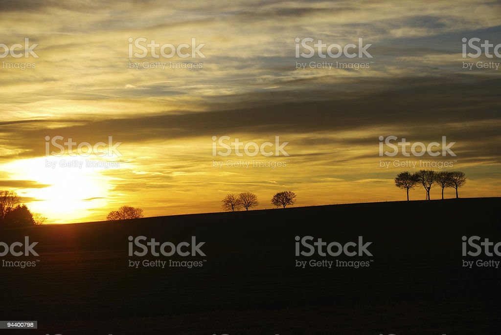 Trees during sunset royalty-free stock photo